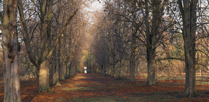 Panoramic view of the Cross Avenue at Anglesey Abbey