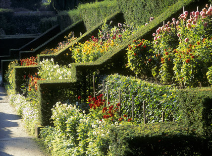 The Dahlia Walk at Biddulph was laid out by James Bateman but later filled in and only rediscovered in 1988; the beds have been replanted with dahlias similar to the original varieties
