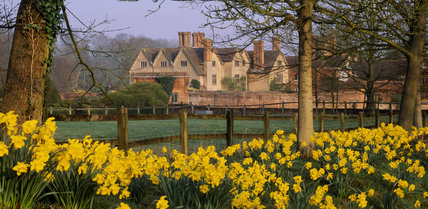 A bank of daffodils in full bloom and a line of horse chestnut trees by the entrance drive with Packwood House in the background