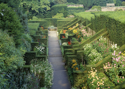 The Dahlia walk from the Shelter House at Biddulph Grange with the yew hedges and butresses