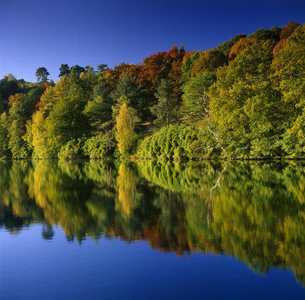 A spectacular bank of trees in Winkworth Arboretum, their multi-coloured foliage reflected in the still water of the lake