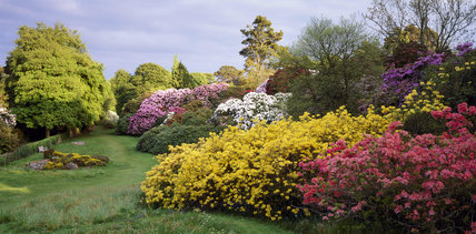 Rowallane Garden in May with pink, red, white, mauve & yellow azaleaes and a small rock garden with alpines & heathers,