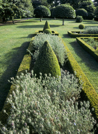 Vertical view of box hedge parterre at Westbury Court Garden