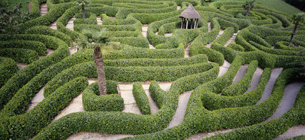 View of the Glendurgan Laurel Maze dating from 1833
