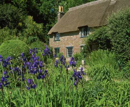 View of Hardy's Cottage over the garden, seen through a group of purple irises in the summer