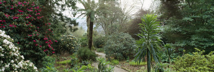 The path through part of the gardens at Trelissick leading to the Dell showing rhododendrons, tree fern and echiums