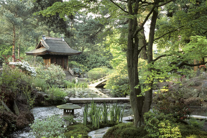 The Shinto Temple and Island seen with the Arched Bridge and full bloomed Azeleas from the Tea House in the Japanese Garden at Tatton Park