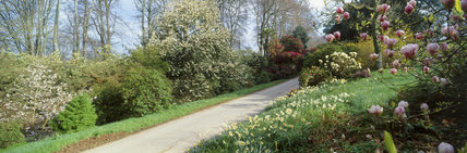 The Driveway entrance at Greenway garden in Spring