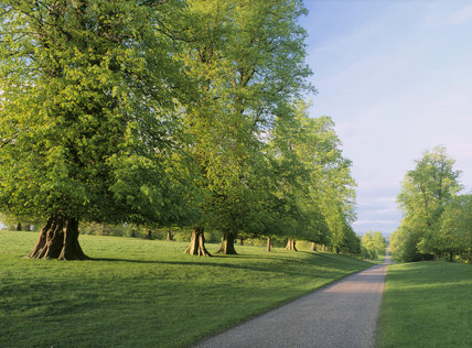 The magnificent Lime Avenue in the Deer Park of the Studley Royal Estate, photographed in the evening
