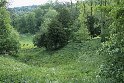 The wilderness area at Prior Park, an C18th landscape garden in Bath inspired by Capability Brown