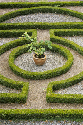 The Knot Garden at Overbecks, neatly clipped low box hedge outlines the pattern, with a ground covering of gravel