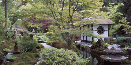 The Tea House amongst Acers and mossy banks in the Japanese Garden at Tatton Park