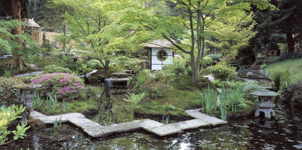 The Tea House amongst Acers and mossy banks in the Japanese Garden at Tatton Park as seen from across the lake