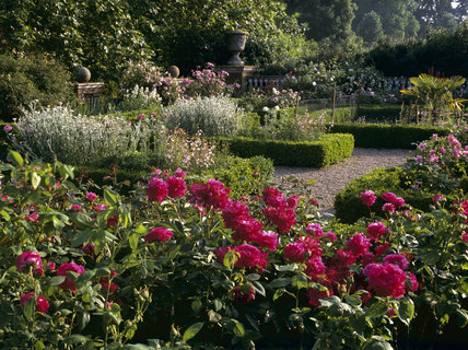 Looking across the Jeykll garden at Hatchlands with the beds bordered by box hedges and peonies prominant in the foreground