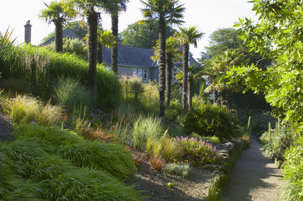 The house with Chusan palms (Trachycarpus fortunei) and gravel area in front, at Overbecks Garden, Salcombe, Devon