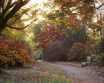 Autumn colour along a path with a garden seat in Sheffield Park, East Sussex