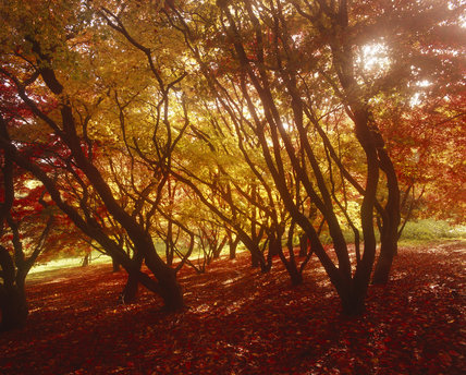 An Autumn scene at Winkworth Arboretum, Surrey