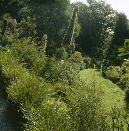 Exotic planting along grassy path at  Coleton Fishacre, the Arts & Crafts-style house designed in 1925 for Rupert and Lady Dorothy D'Oyly Carte, at Kingswear, Devon