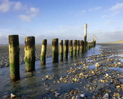 Low tide breakwater posts at East Head, West Wittering, near Chichester, West Sussex