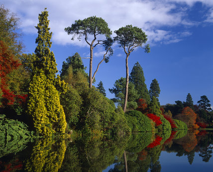 Trees at Sheffield Park Garden reflected in the lake