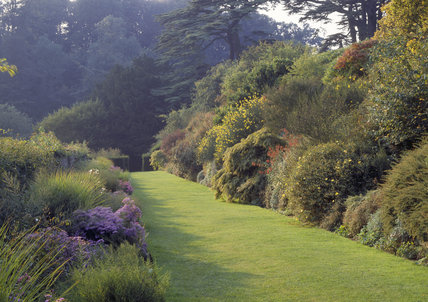 The Aster border and terrace starting to show Autumn colour