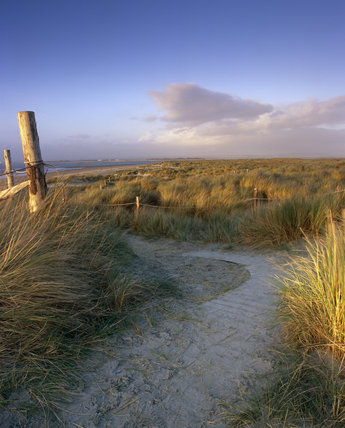 Pathway through the dunes at East Head, West Wittering, near Chichester, West Sussex