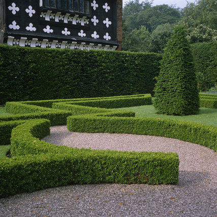 A close up of part of the Knot Garden at Little Moreton Hall showing the neatly trimmed hedges that formed any number of geometrical shapes