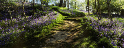 A public path through stunning bluebell woods in Emmetts Garden