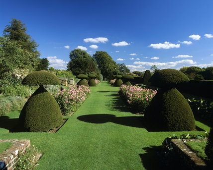 View of the garden at Hinton Ampner from the South of the house showing the unusual shaped topiary and flower beds filled with pink flowers