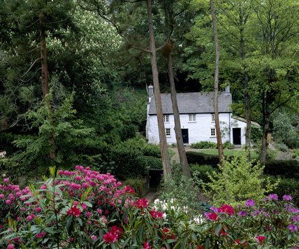 Trelissick Garden, a white cottage appearing behind the trees, with deep pink and red rhododendrons in the foreground