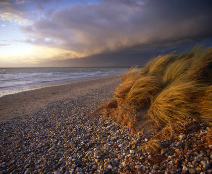 A dramatic picture of wind blown grass on the shingle of East Head, West Wittering, highlighted by the unusual clouds