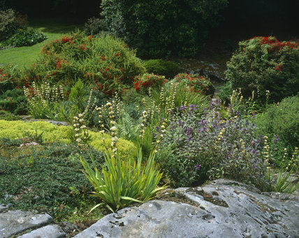 Various shrubs and plants in the Rock Garden at Rowallane, some of them are in bloom
