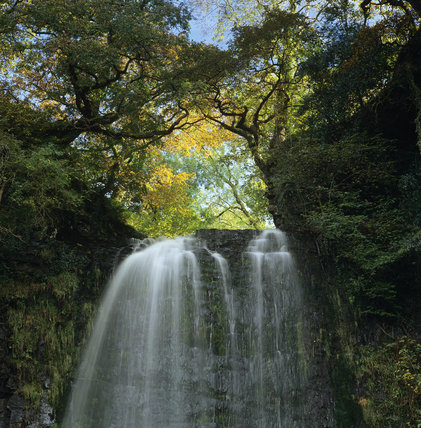 Henrhyd Falls emerging over a ledge, from among the trees, and falling in two white plumes