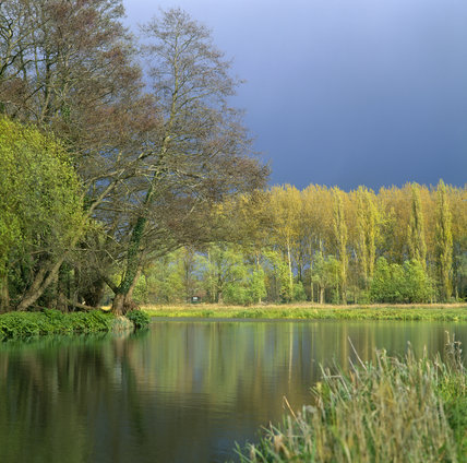 A broad reach of the River Wey Navigations, between Walsham and Newark Locks, beneath a menacing sky