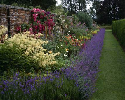 A colourful herbaceous border at Oxburgh Hall, in July, with Catmint (Nepeta grandiflora), Astilbe