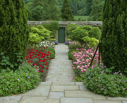 The Rose Garden at Chartwell, laid out by Lady Churchill, in full bloom, in July, with the pink