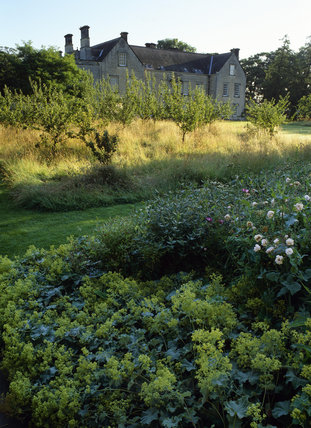 The South Front of Nunnington Hall with the orchard & Alchemilla mollis in the foreground in the very overgrown garden