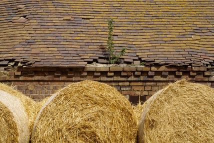 A section of dilapidated roof with hay barrels in the foreground showing the repair work needed to be done at the Mose House Farm on the Dudmaston Estate