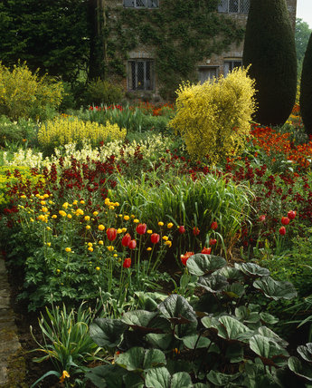 A corner of the Cottage Garden at Sissinghurst in May, with Wallflowers (Cheiranthus)
