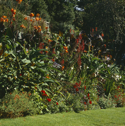Hot summer border at Coleton Fishacre, the Arts & Crafts-style house designed in 1925 for Rupert and Lady Dorothy D'Oyly Carte, at Kingswear, Devon