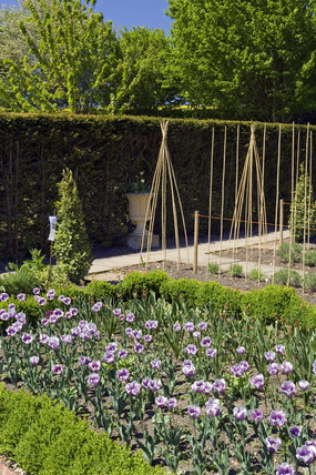 The Cutting Garden at Ightham Mote, Sevenoaks, Kent, with hedged beds and cane tripods for training climbers