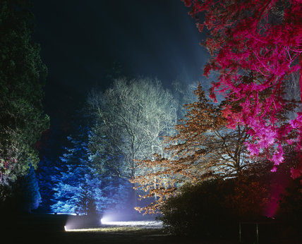 Enchanted Forest - an evening event at Sheffield Park with dramatic lighting amongst the trees and planting
