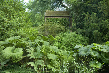 The Pump House from the lawn east of the Hosta Garden with Gunnera and Arundo in the foreground at Dunham Massey, Cheshire