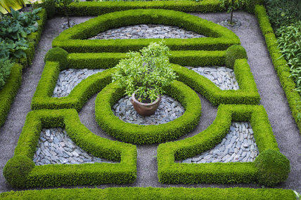 Overview of the Knot Garden with dwarf box hedging at Overbeck's, Salcombe, Devon