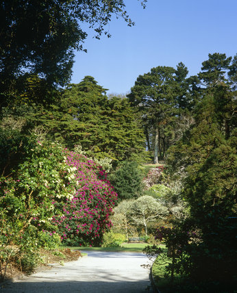 View into Trelissick Garden, Cornwall with its springtime planting of azaleas, rhododendron and foliage