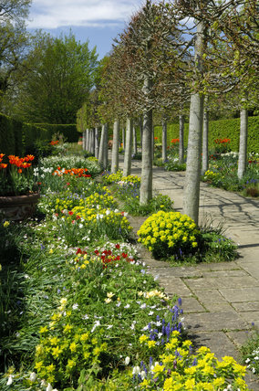 The Lime Walk at Sissinghurst Castle Garden, Kent, in May