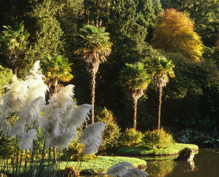 Pampas grass and palm trees alongside a lake in autumn in Sheffield Park, East Sussex
