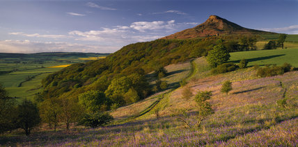 Newton Wood at Roseberry Topping in early May with Bluebells growing up through dead bracken along a footpath