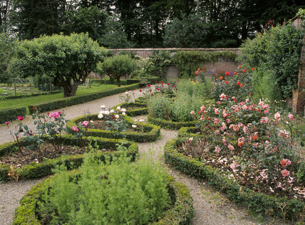 The Rose Garden at Llanerchaeron in the West Walled garden with low box hedging around roses and Nigella in the foreground