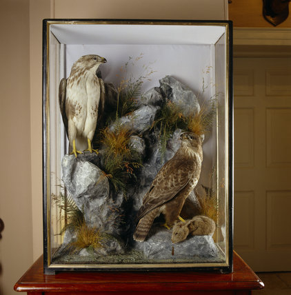 The Entrance Hall at Llanerchaeron with a close view of a glass display case containing two stuffed buzzards perched on a rock with a dead rabbit